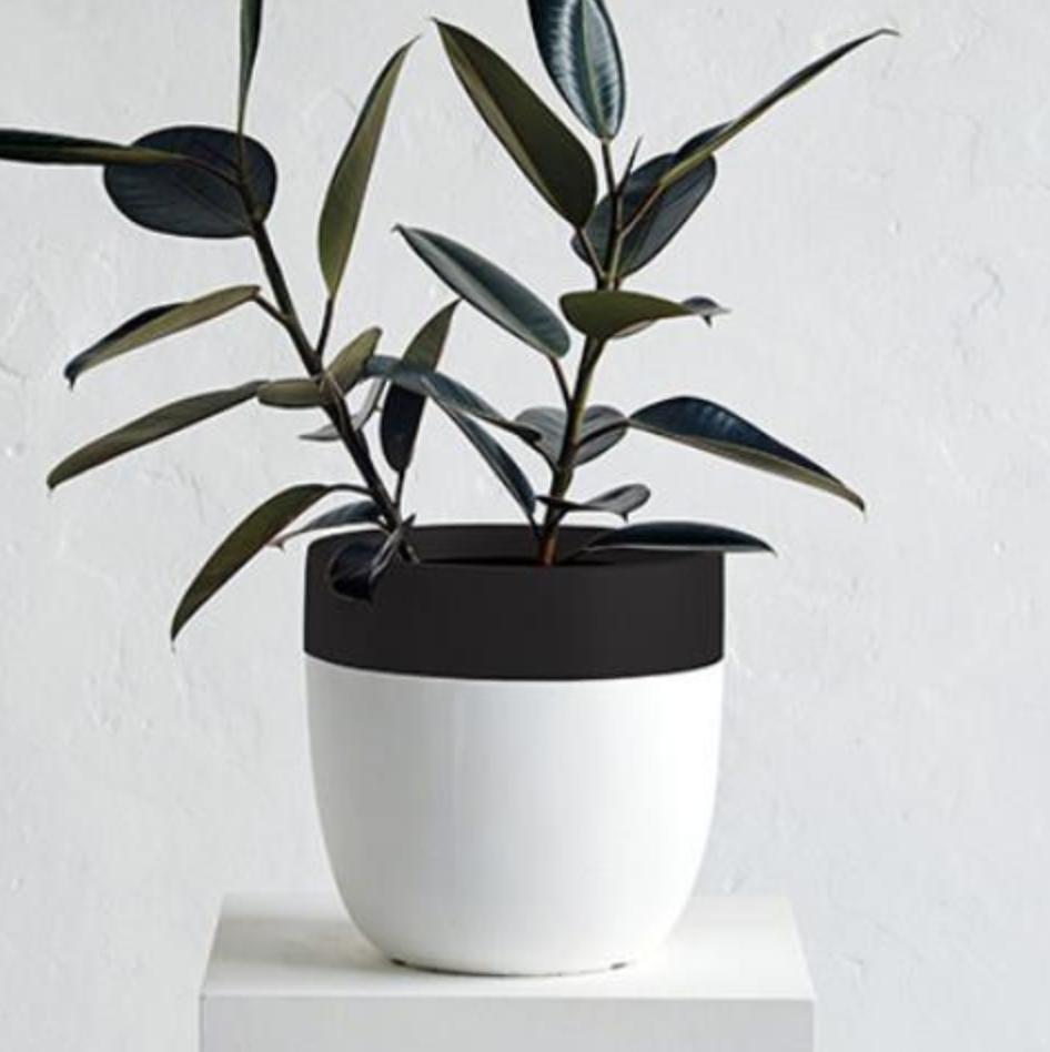 pot-plant-Design-Twins