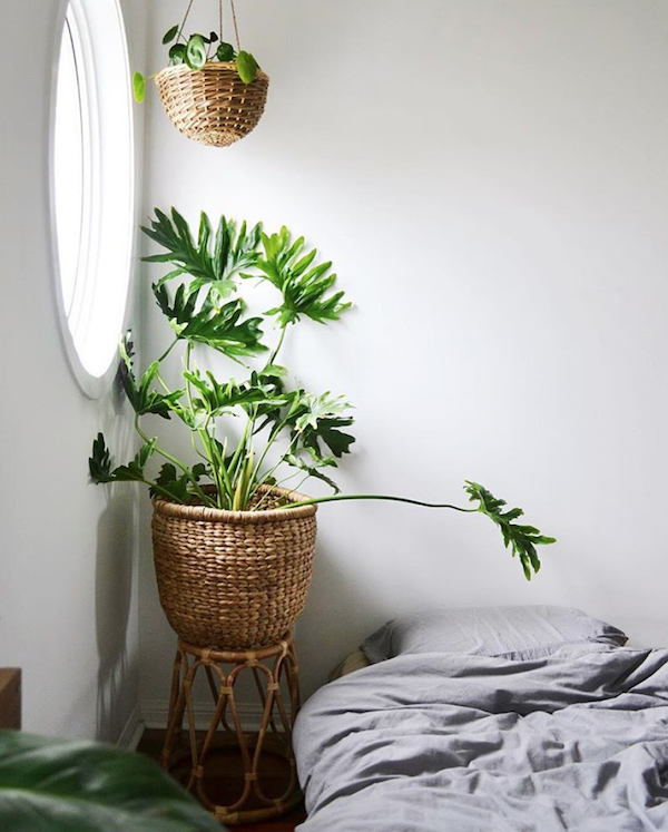 How-to-choose-houseplants-philodendron-