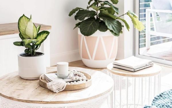 How to Choose Houseplants Like A Designer