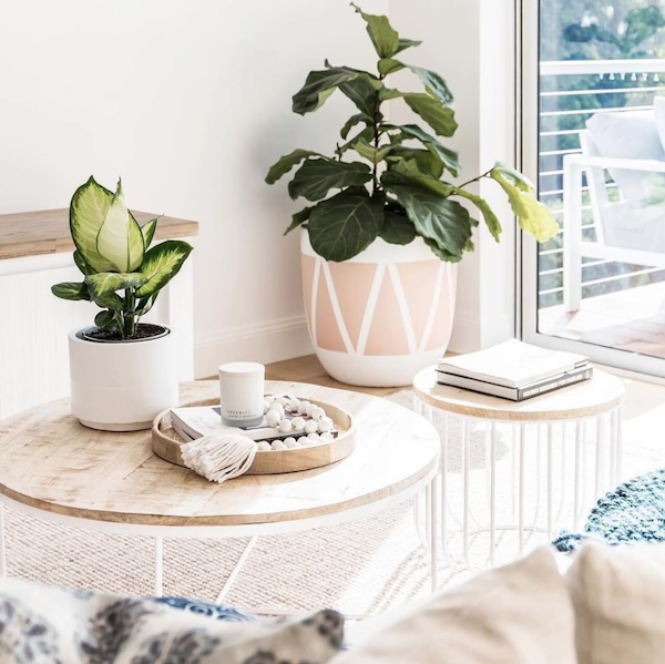 Best-tips-to-decorate-with-plants-3