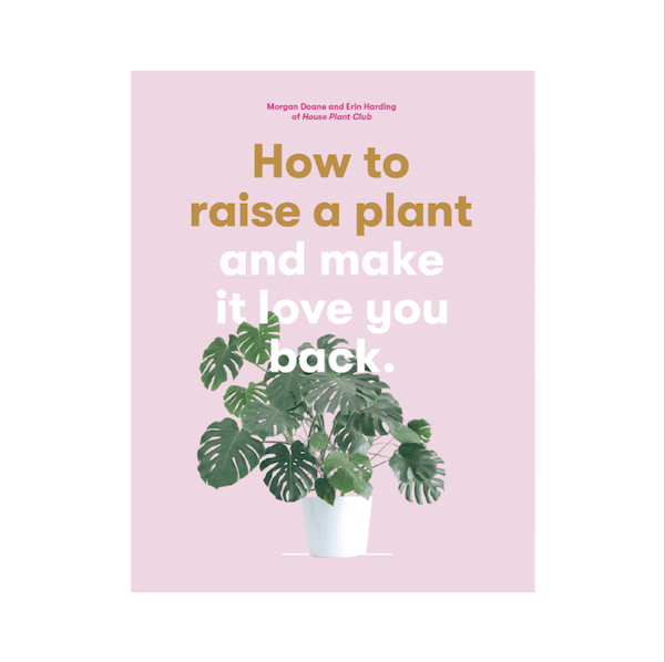 Best-tips-for-caring-for-your-houseplants-2
