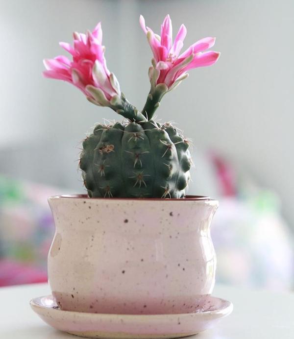 houseplant_for_beginner1