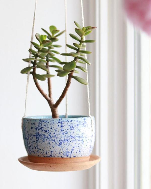 houseplant_for_beginner3