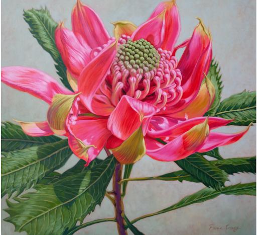 Red Waratah Beauty 2 by Fiona Craig